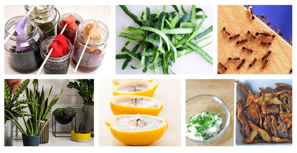 25 astonishing uses for your fruit & vegetable peel