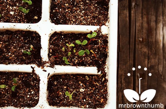 Grow little ones!