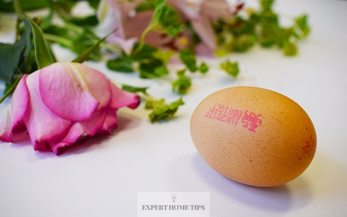 Egg in flower water