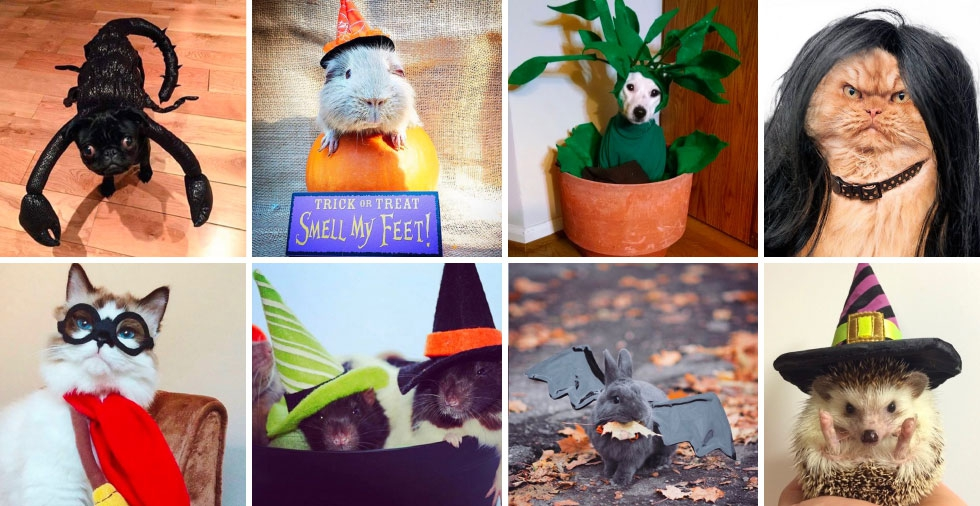 24 of the most adorable Halloween pet costumes that will make you wish you had a pet