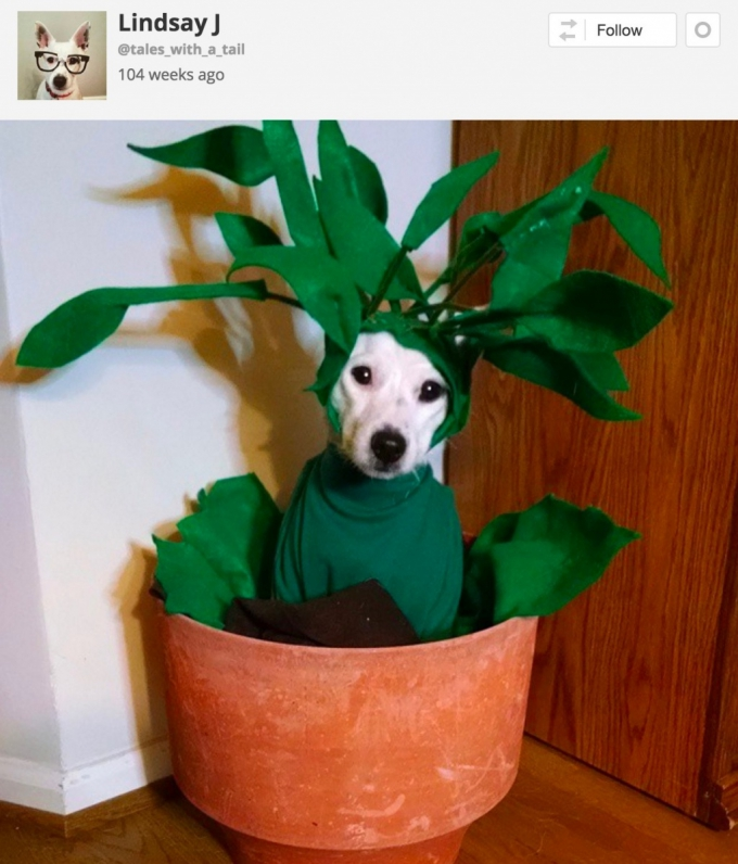 Dog in plant pot Halloween Costume