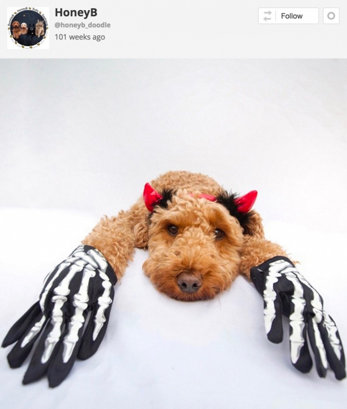 Dog in skeleton Halloween costume