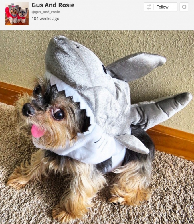 Dog in Halloween Shark costume