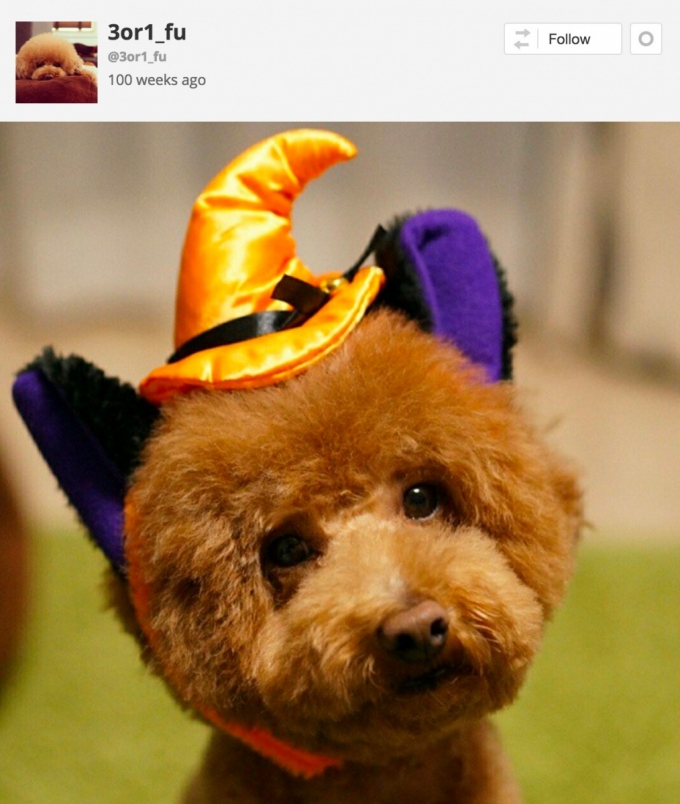 Dog in witches Halloween costume