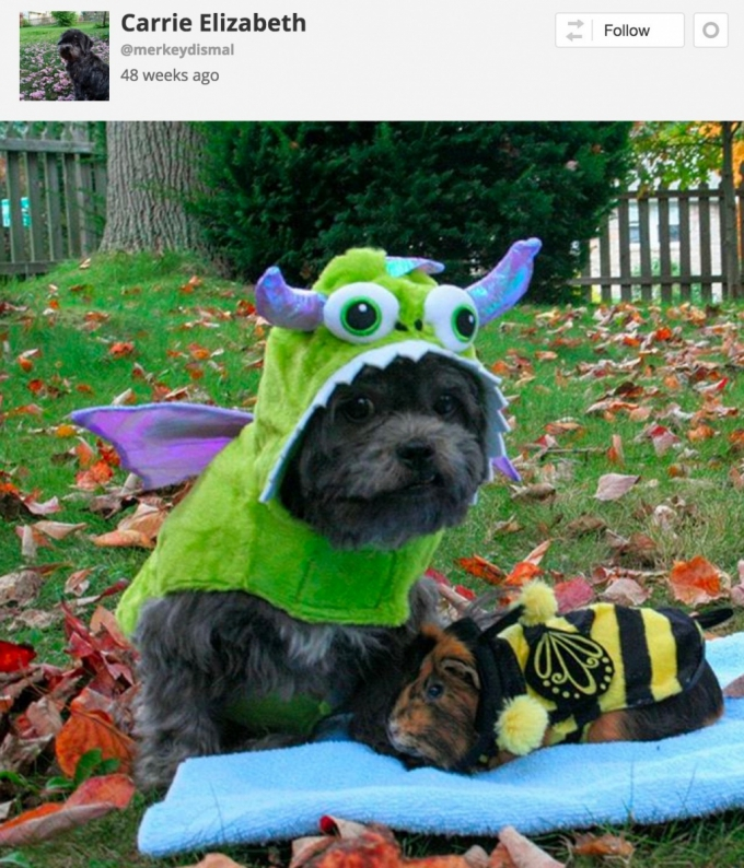 Dog & guinea pig Halloween costumes