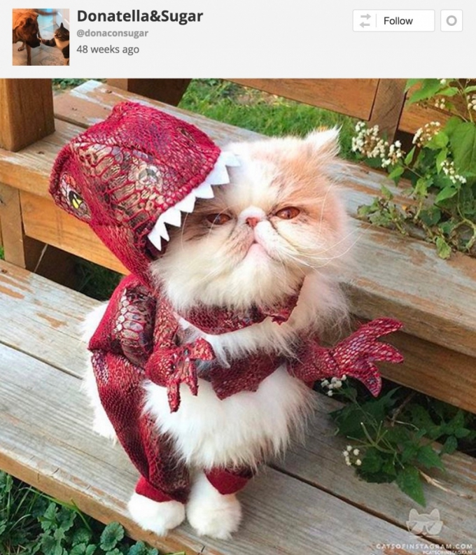 Cat in dinosaur Halloween costume