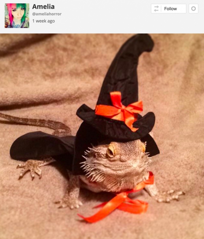 Dragon reptile in Halloween witches costume