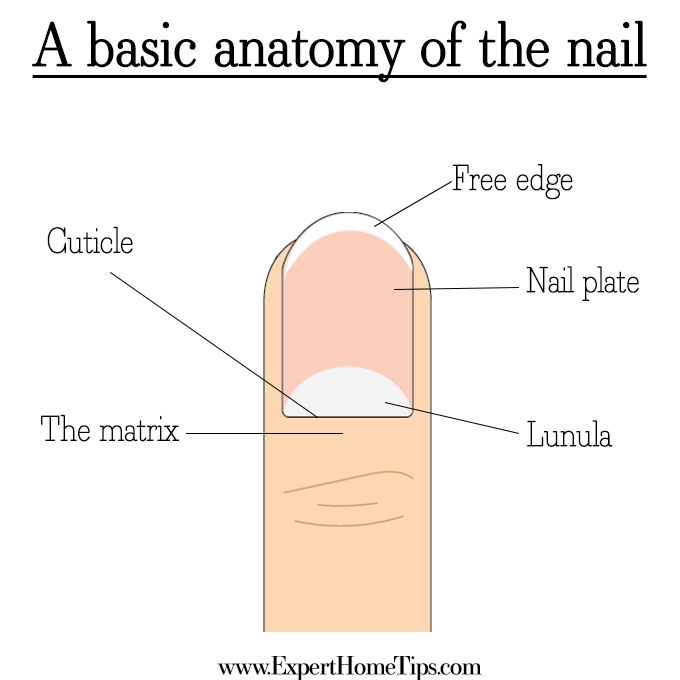 How to get long nails (it\'s easy & it WORKS!) - Expert Home Tips