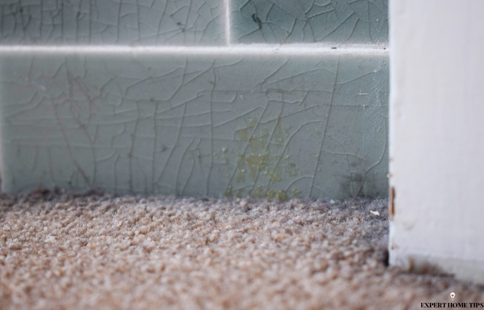 cover gaps to prevent ants in the home