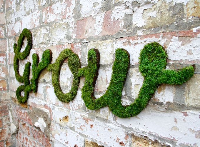 diy moss graffiti recipe