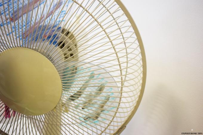fan to prevent bugs