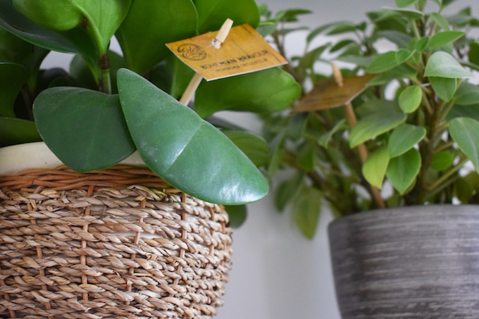 How to clean house plants
