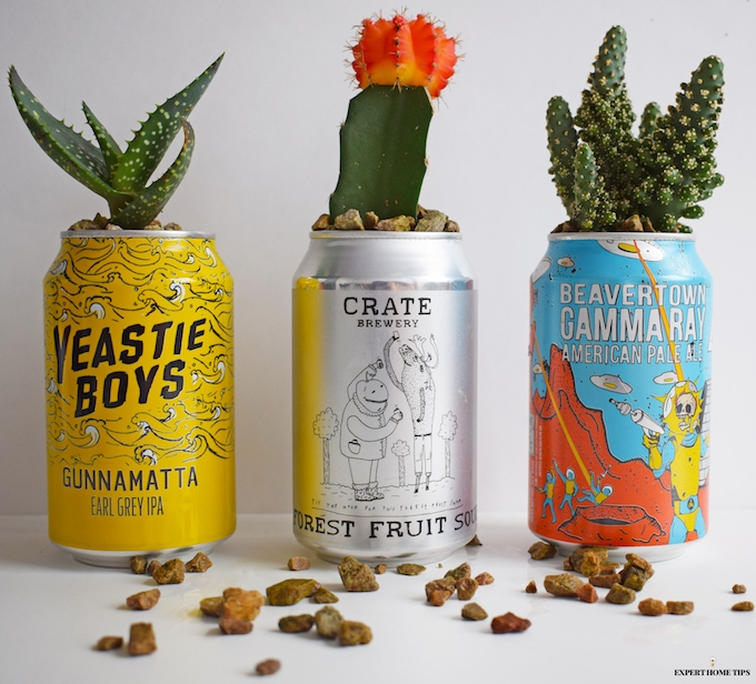 DIY cactus planters using cans