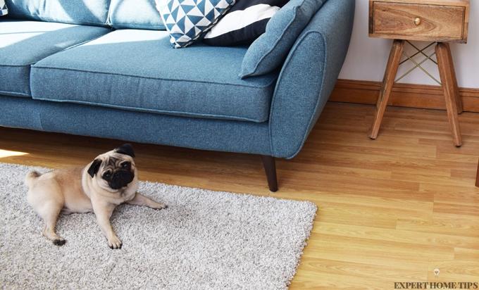 warm shaggy rug