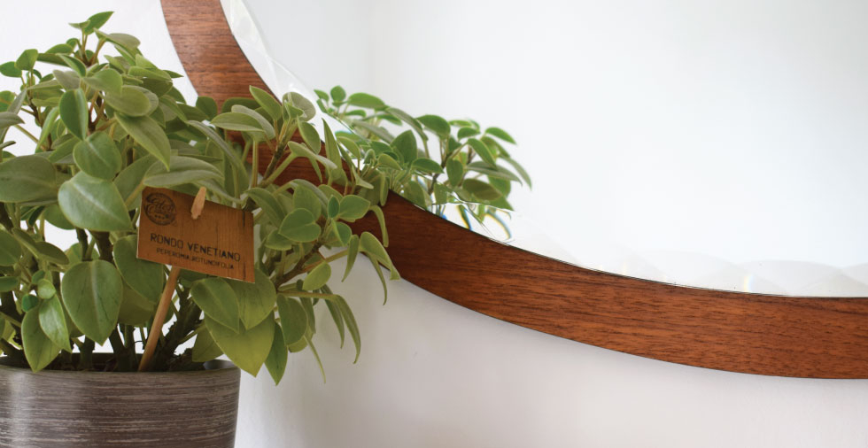 Wooden mirror and green plant