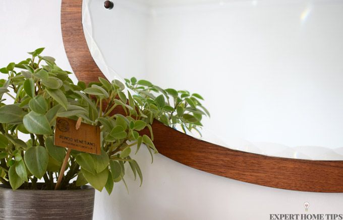 mirror and plant