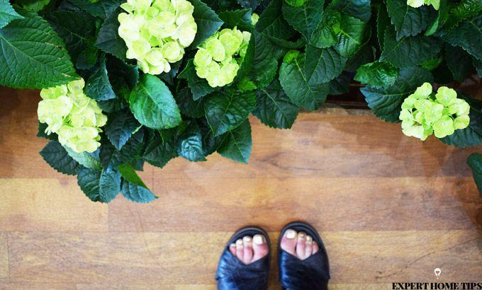 florist houseplants