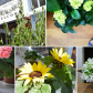 Houseplant care: secret tips & tricks from our local florist