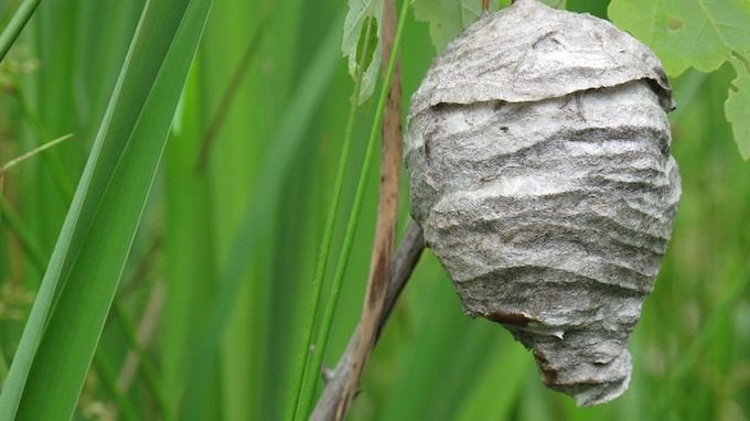 Nest or hive