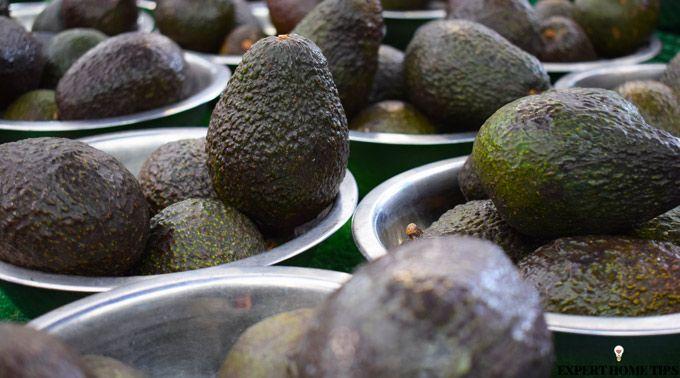 avocado market stand