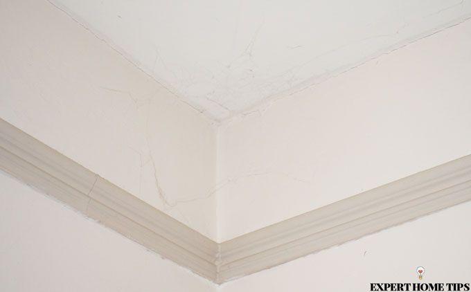 spider webs in ceiling corner