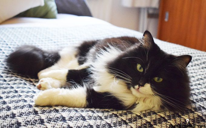 black and white cat on bed